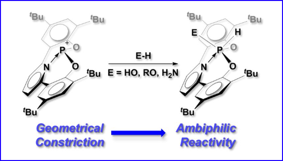Ambiphilic geometrically constrained phosphenium cation