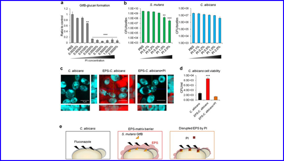 Bacterial-Derived Exopolysaccharides Enhance Antifungal Drug Tolerance in a Cross-Kingdom Oral Biofilm