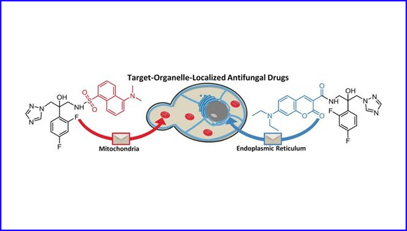 Localizing Antifungal Drugs to the Correct Organelle Can Markedly Enhance their Efficacy